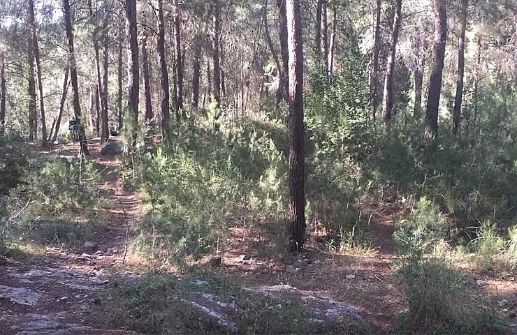 The Ben-Shemen Forest
